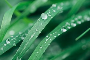 raindrops on the grass