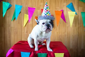Dog dressed for party