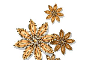 Star anise isolated in sketch. Spice