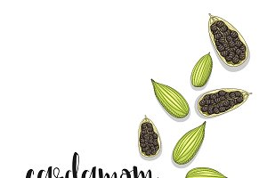 Cardamom isolated in sketch. Spice