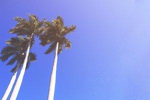 Pam Trees Fade