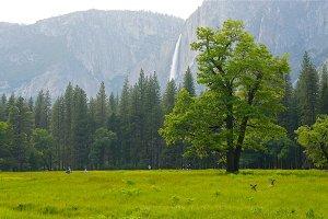 Idyllic Paradise 2, Yosemite Deer