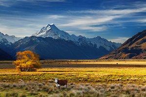 Mount Cook, Canterbury, New Zealand