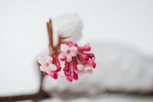 Pink flowers in winter