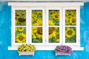 Window with Sunflower field