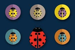 Vector group of beetles