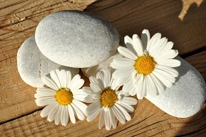stones and daisies