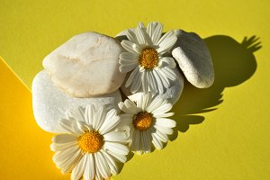 daisies and stones