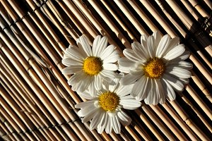 daisies on reeds