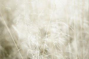 Grass no 01