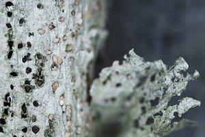 Tree skin no 02