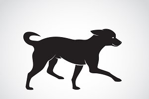 Vector image of an dog. Chihuahua