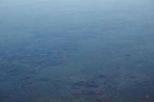 Leaves underwater