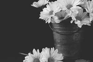 Daisies in pail in black and white