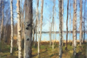 Birch Tree oil paint