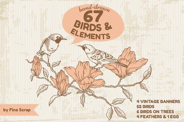 67 Hand-drawn Birds & Elements