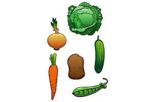 Fresh healthful isolated vegetables