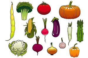 Fresh and ripe vegetables