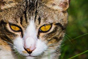 Hunter's Eyes