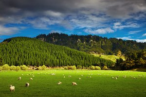 New Zealand landscape, North Island