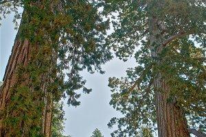 Clothespin Panorama Top, Mariposa