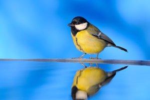 Bird water reflection.