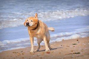 Funny wet dog.