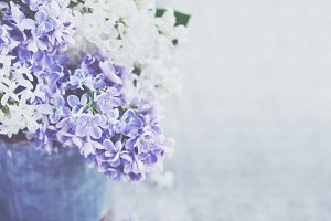 Lilac bunch