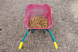 Almonds in a wheelbarrow