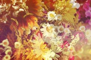 Vintage rudbeckia and daisy flowers.