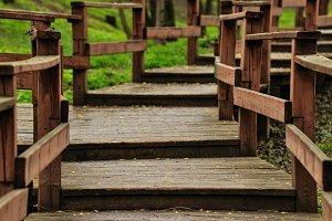 Wooden walkways in forest. Steps.