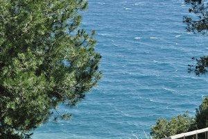 road, wooden railing , trees, sea