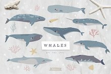 Cute Whales collection by  in Graphics