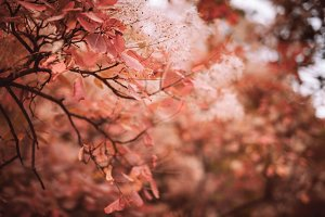 Beautiful autumn nature background