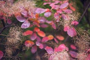Beautiful autumn nature background