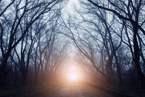 Autumn forest in fog with road