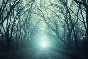 Scary mysterious forest in fog
