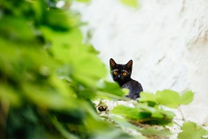 Cute black kitten portrait