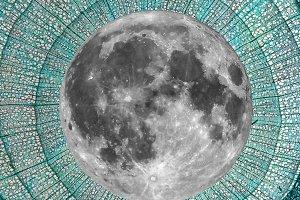 Full moon over Tilia stem micrograph