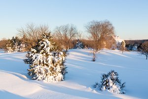 Snow covers trees in garden