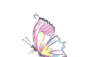 butterfly, sketch, vector