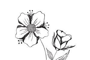 flowers, vector