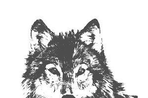 wolf, vector