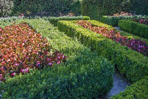 Estate Hedges (Photo)