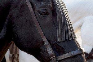 Horse head close up. Fair Seville