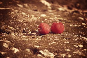 Two red apples. Vintage style.