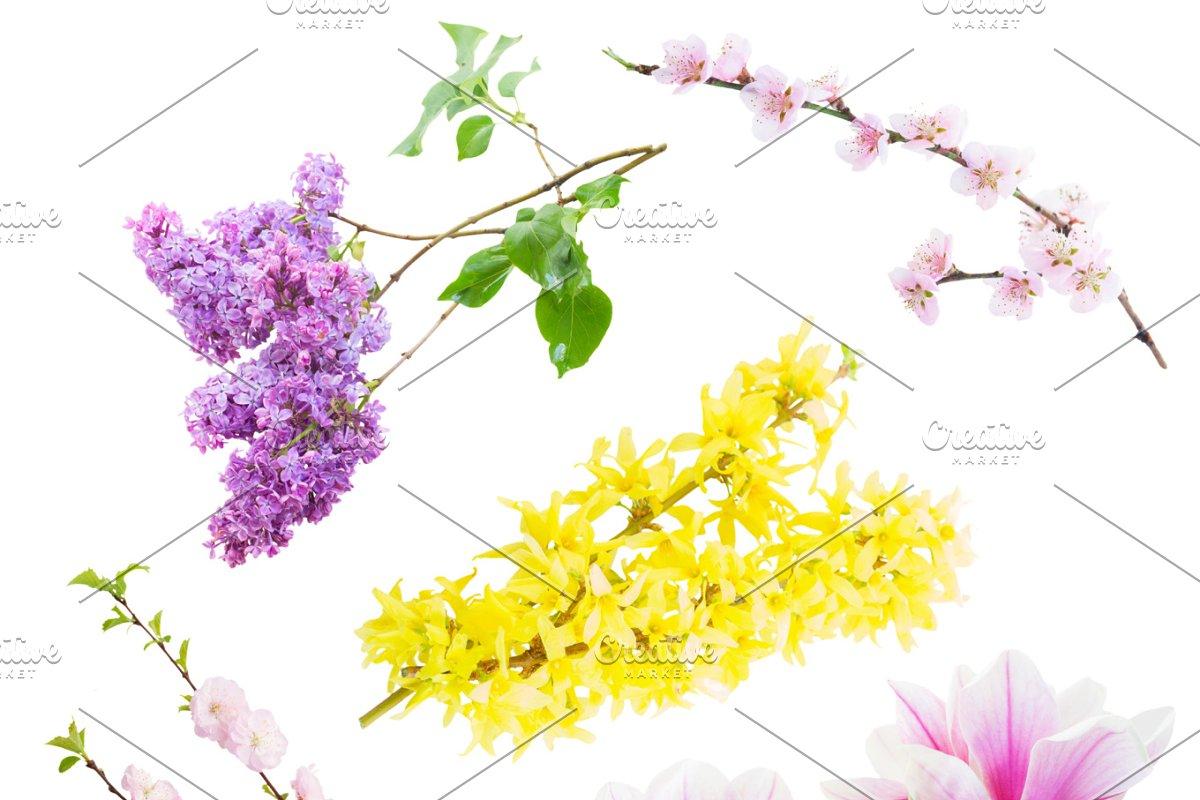 07e90bdd8 Flowers tree twigs ~ Graphic Objects ~ Creative Market