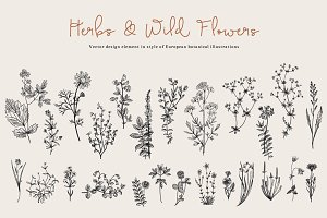 Herbs & Wild Flowers. Set