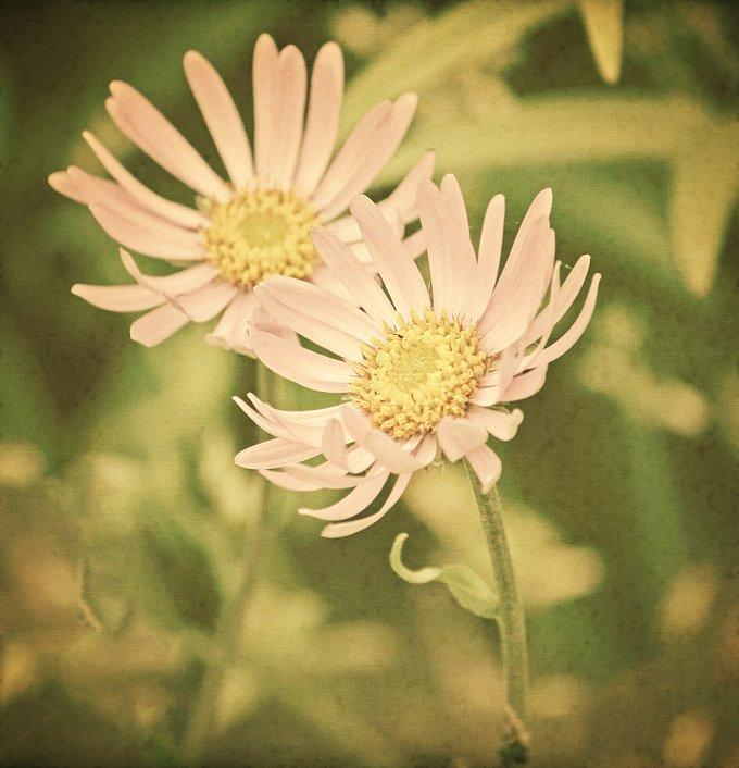 Vintage floral card. Autumn flowers. - Nature