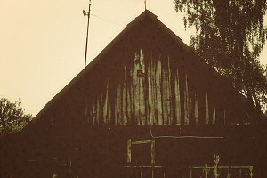 Stork on the roof of the cowshed
